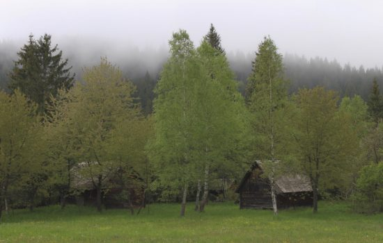 What to Know Before Buying Your Raw Land for Off-Grid Living